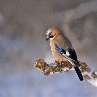 Gezinsmoment – Bijbels zelfbeeld – Meer waard dan de vogels